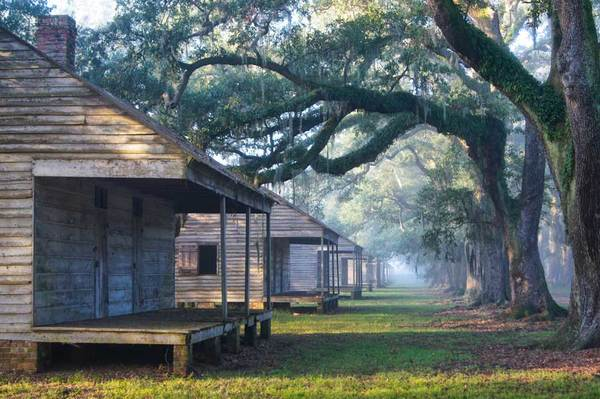 Quarters, morning fog, Evergreen Plantation