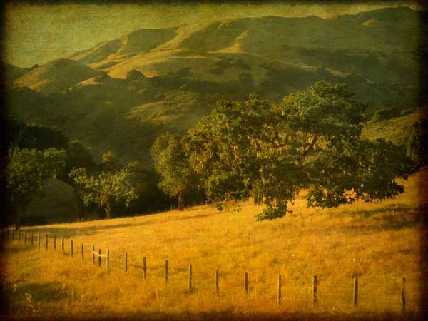 Valley oaks and hills with fence, study 12, Santa Lucia range