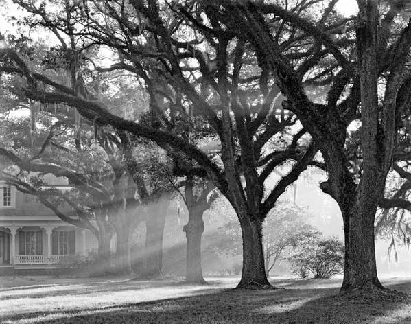 Oaks and morning light, The Oaks Plantation, St. Francisville