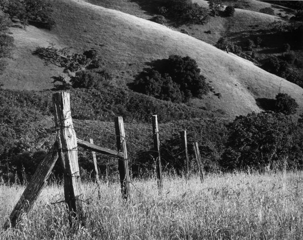 Fence, Vasquez Ridges, Carmel Valley